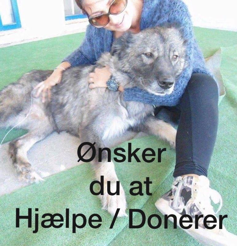 Donationer til fordel for gadehundene på Chios